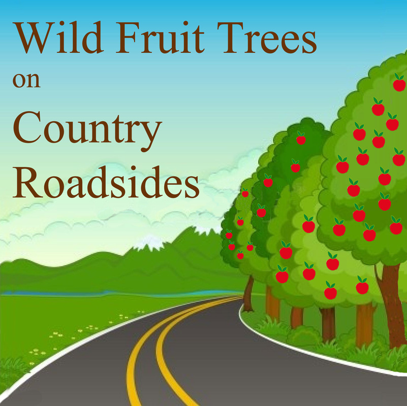 Wild Rural Fruit Trees Vs. Urban Foraging Fruit Trees
